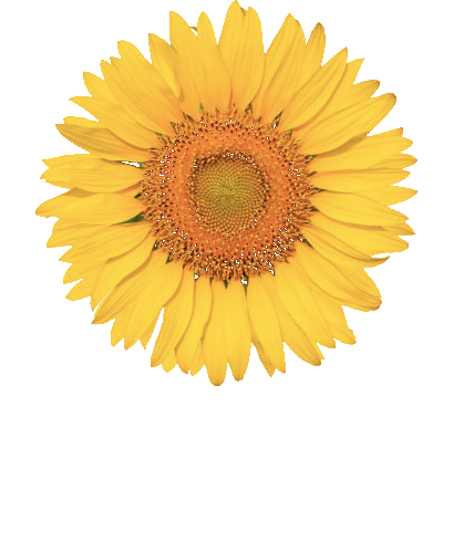 Sunflower CBT Services